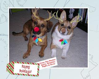 Christmas reindeer 2006