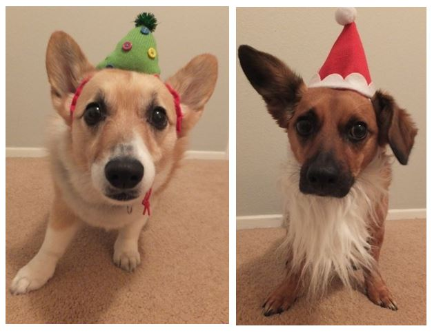 Holiday dogs 2013