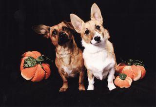 Halloween scan