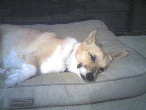 Roxy_tired