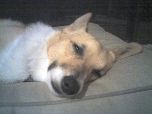 Roxy_tired02