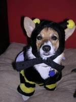 Roxy_bee